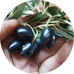 Korogonas Ark wild olives